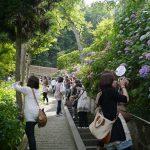長谷寺のアジサイの径