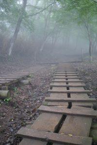 塔ノ岳の登山道