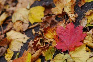 紅い落ち葉