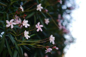 街角のお花