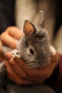 ウサギのふわさん