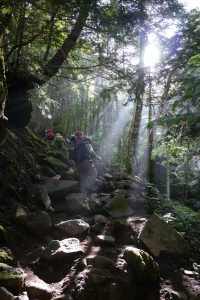 少し暗い登山道に差し込む光の筋がとても素敵だった