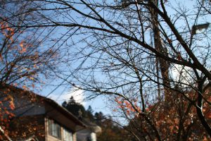 葉が落ちてすっきり