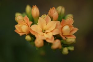 伊豆シャボテン公園の温室の花
