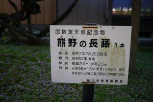 国指定天然記念物 熊野の長藤