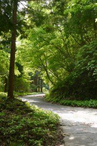塩水林道はこんな感じで木陰があって歩きやすいです