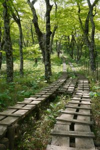 丹沢山の木道