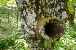 気になる穴の開いている木