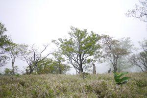 丹沢山の山頂からの景色。霧で見えない