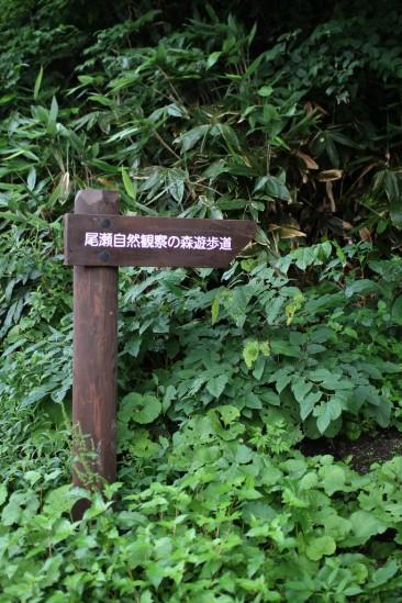 尾瀬自然観察の森遊歩道の入り口