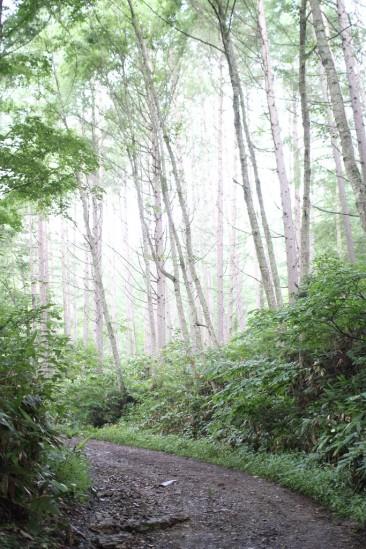 尾瀬自然観察の森遊歩道 (46)