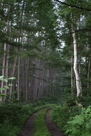 尾瀬自然観察の森遊歩道 (44)