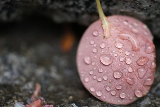 雨の日の写真散歩 (4)