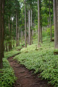 杉林のとても気持ち良い道