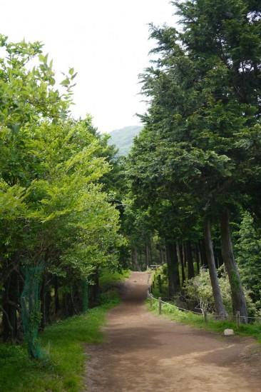 春の大山登山 (43)