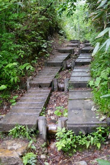 濡れた尾瀬の木道
