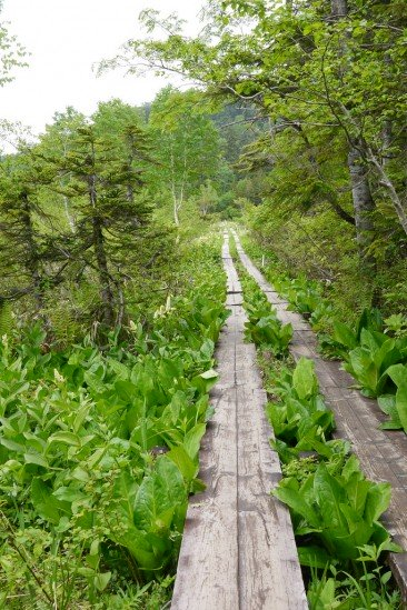 三平下から尾瀬沼ヒュッテの木道