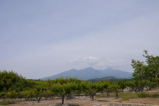 遠くに八ヶ岳が見えます
