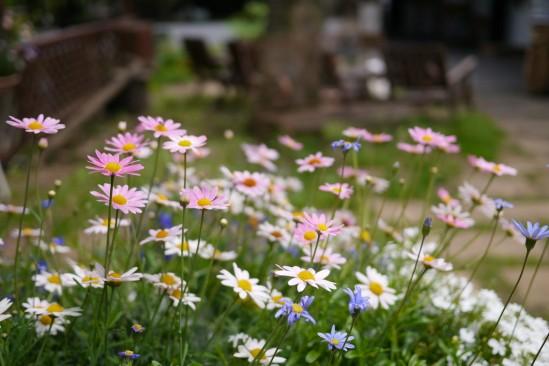 自然派レストラン美咲小舎の前に咲いていたお花♪