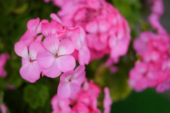 清里マミイのお花♪