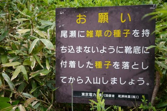 尾瀬沼ヒュッテでテント泊、燧ヶ岳登山 (8)