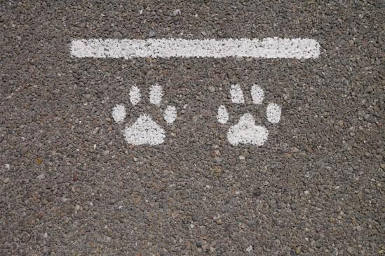 談合坂SAの犬用の停止線