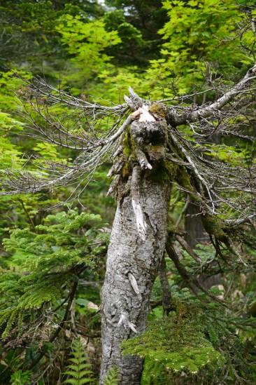 ラスボスの第一形態っぽい木