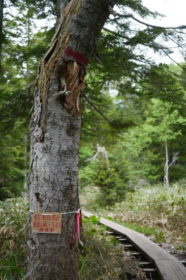 枯れ木注意
