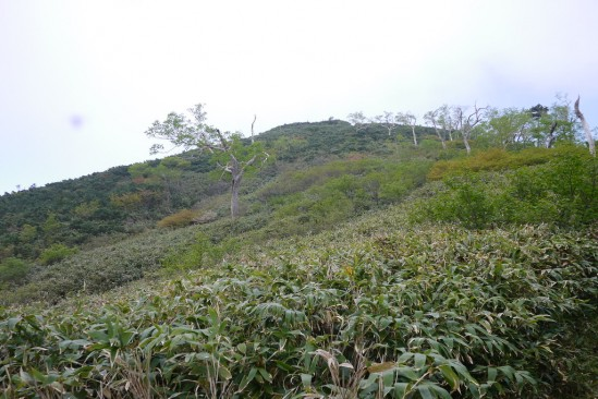 尾瀬の燧ヶ岳登山 (16)
