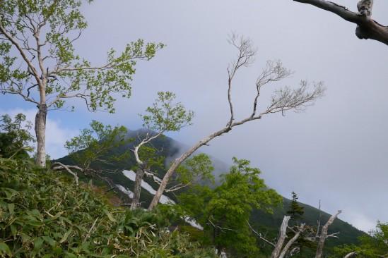 尾瀬の燧ヶ岳登山 (17)