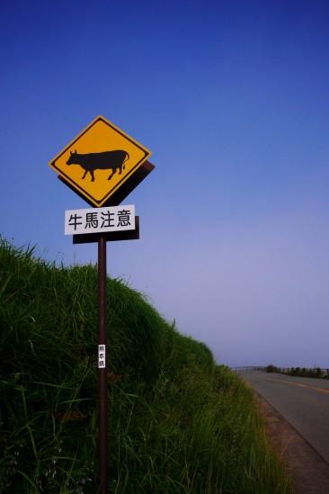 阿蘇の牛馬注意標識 (牛バージョン)
