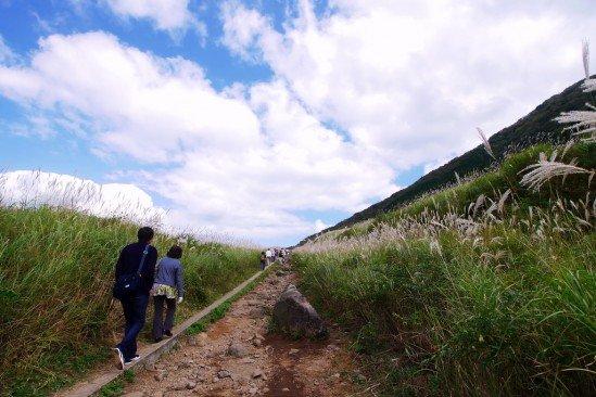 仙石原ススキ草原 (12)
