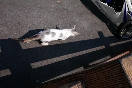 高千穂神社の前にいた猫