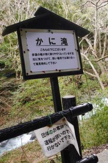 河津七滝・河津桜 (25)