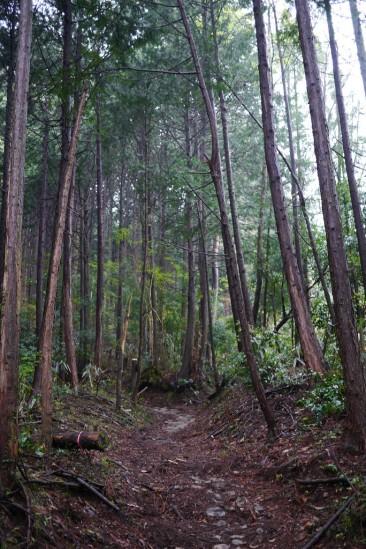蛭ヶ岳 登山 (9)