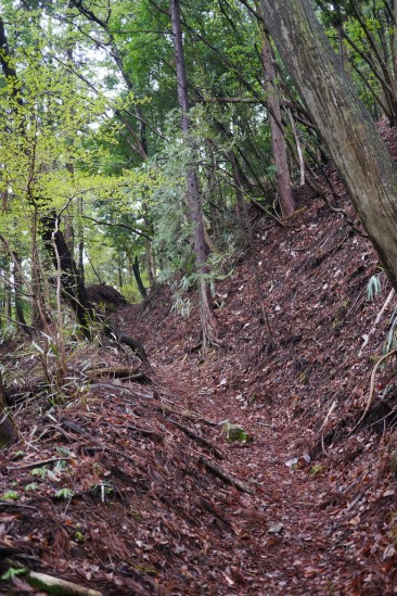 蛭ヶ岳 登山 (16)