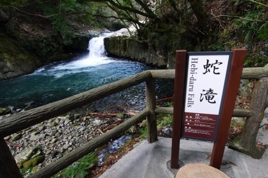 河津七滝・河津桜 (39)