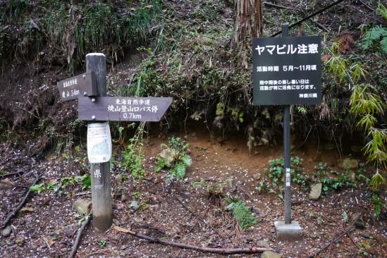 蛭ヶ岳 登山 (4)