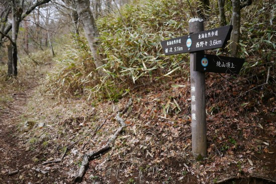 蛭ヶ岳 登山 (30)