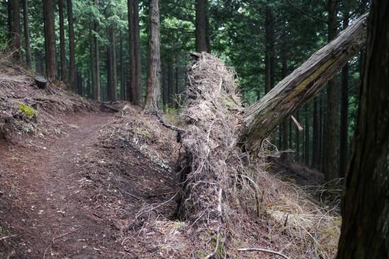 蛭ヶ岳 登山 (48)