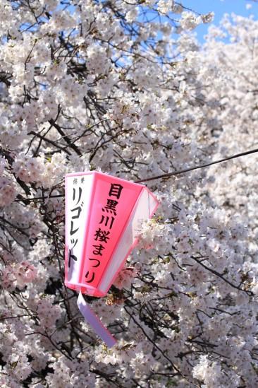 目黒川の桜 (2)