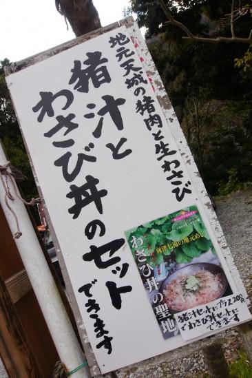 河津七滝・河津桜 (21)