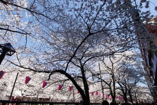 目黒川の桜 (21)