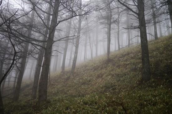 蛭ヶ岳 登山 (61)