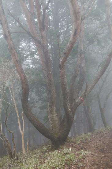 蛭ヶ岳 登山 (66)