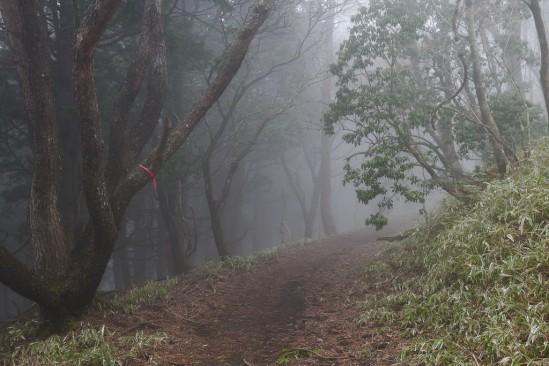 蛭ヶ岳 登山 (67)