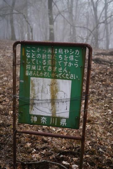 蛭ヶ岳 登山 (83)