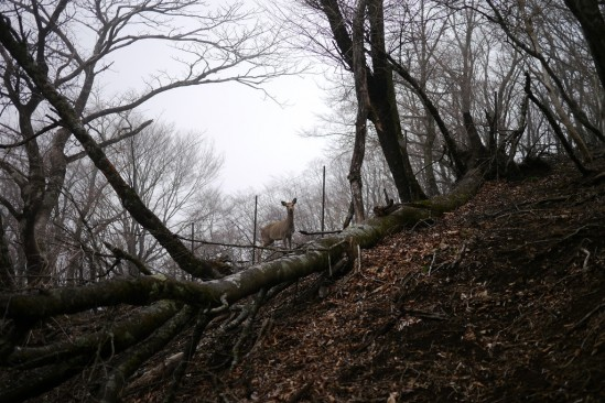 蛭ヶ岳 登山 (86)
