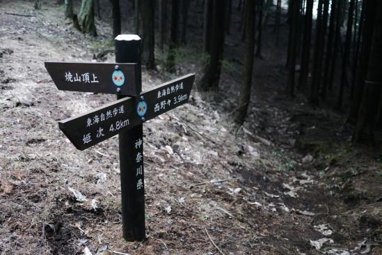 蛭ヶ岳 登山 (121)