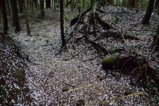 蛭ヶ岳 登山 (123)